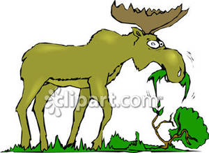 Plant And Animal Clipart.