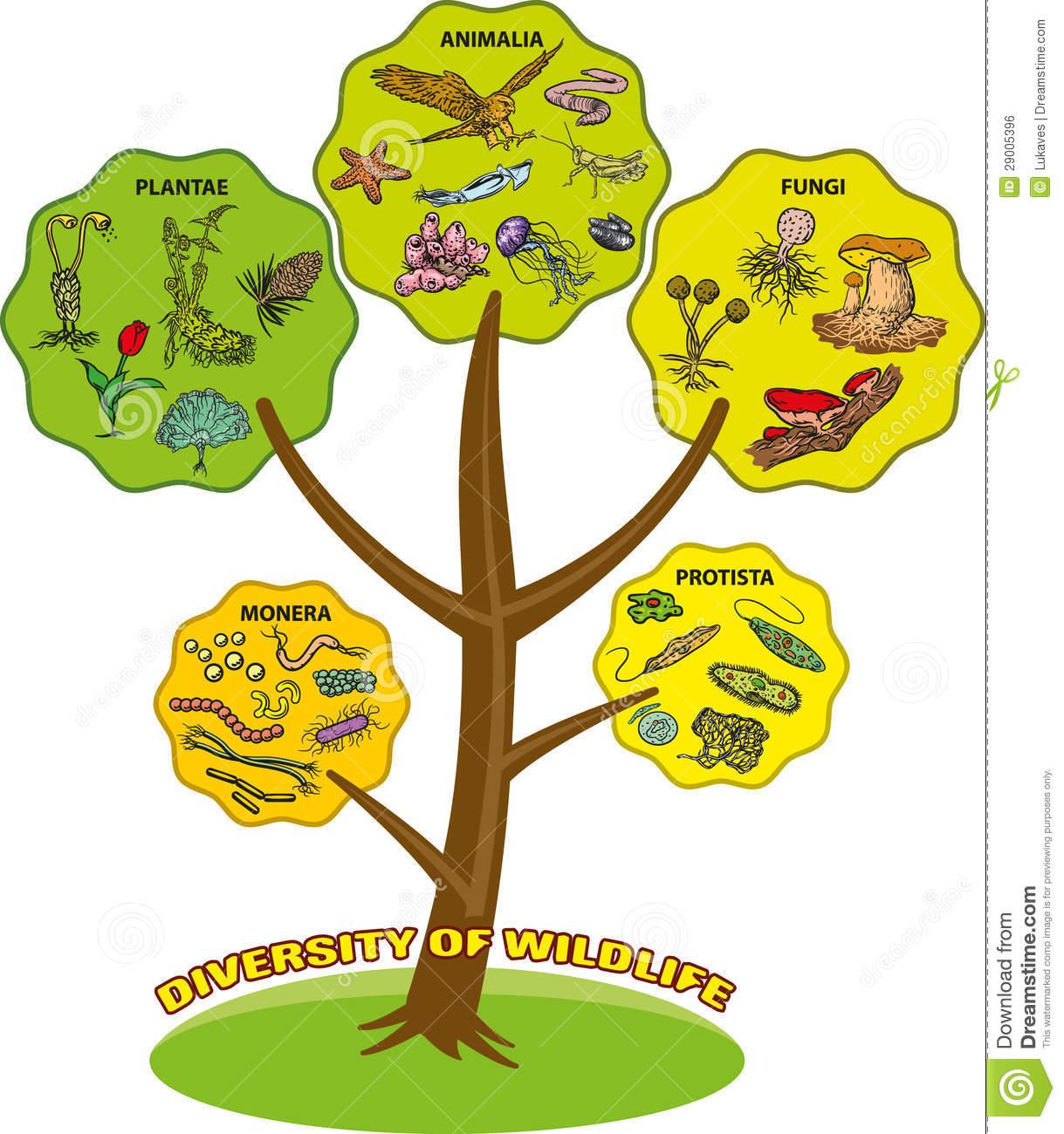 Diversity Of Wildlife Royalty Free Stock Image.