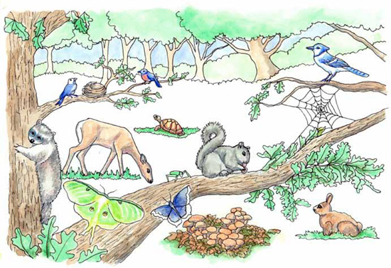 Gardening for wildlife.