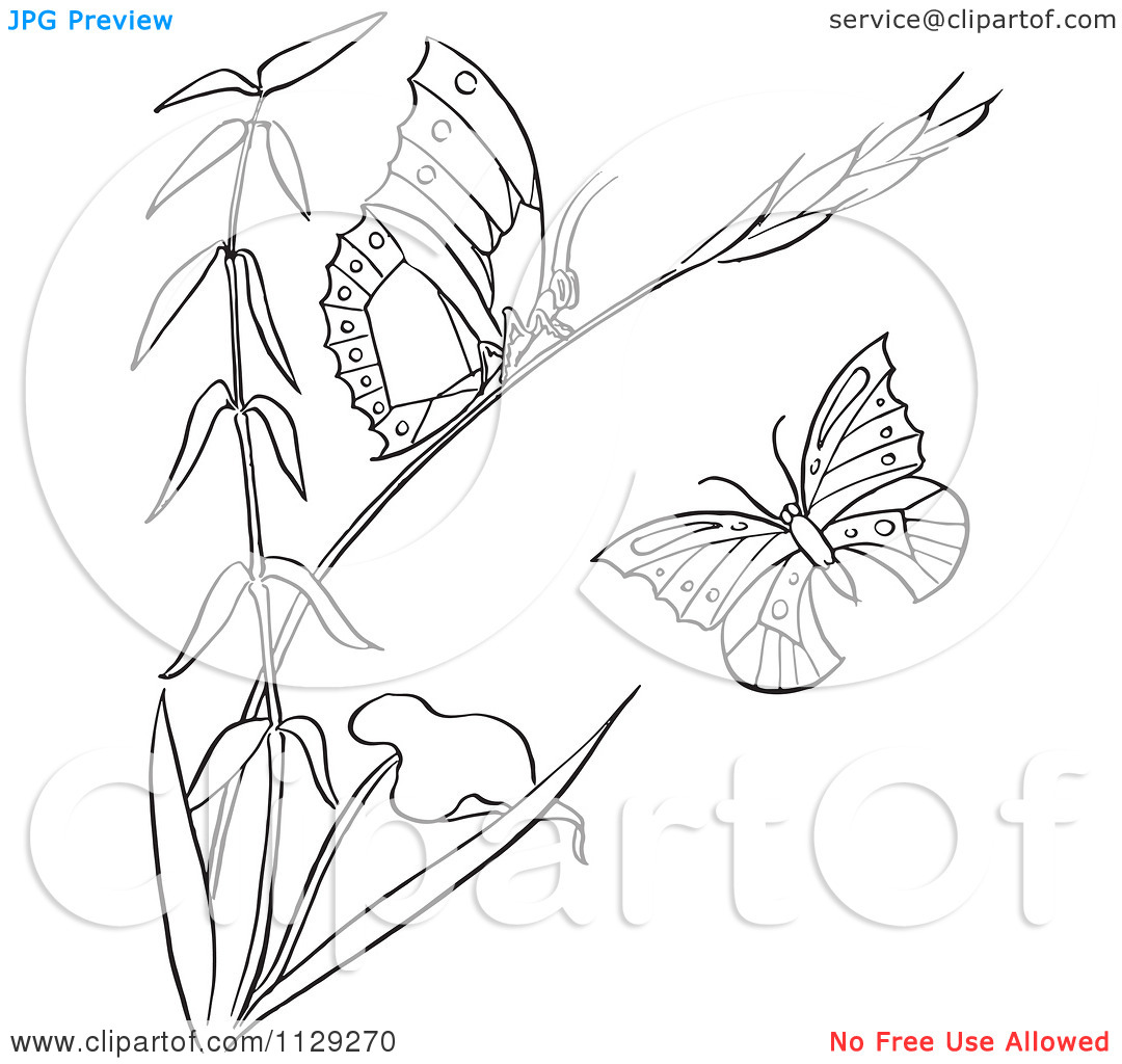 Cartoon Clipart Of An Outlined Plant With Butterflies.