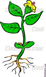 Plant with roots Vector Clip art.