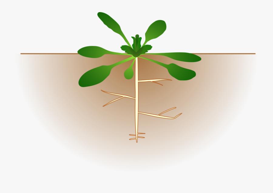 Clip Art Plant With Roots Clip Art.