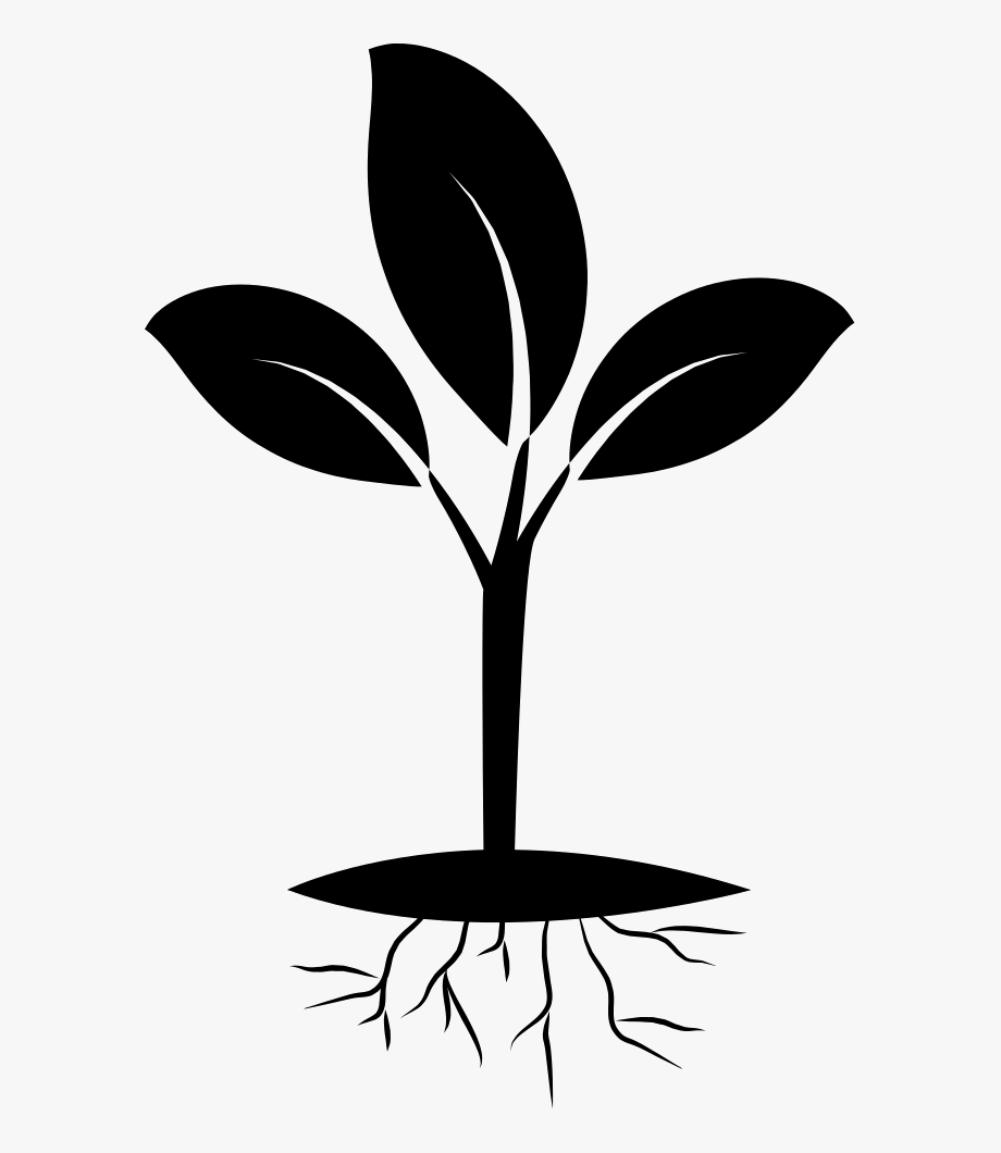 Free Plant Roots Png.