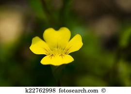 Plantaginaceae Stock Photos and Images. 341 plantaginaceae.