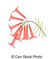 Plantaginaceae Clipart Vector and Illustration. 14 Plantaginaceae.