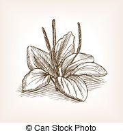 Plantago Clipart Vector and Illustration. 15 Plantago clip art.