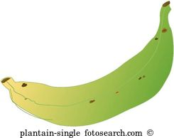Plantain Stock Illustrations. 45 plantain clip art images and.
