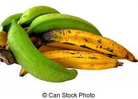 Plantain Images and Stock Photos. 1,976 Plantain photography and.