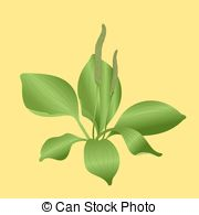 Plantain Illustrations and Clip Art. 138 Plantain royalty free.