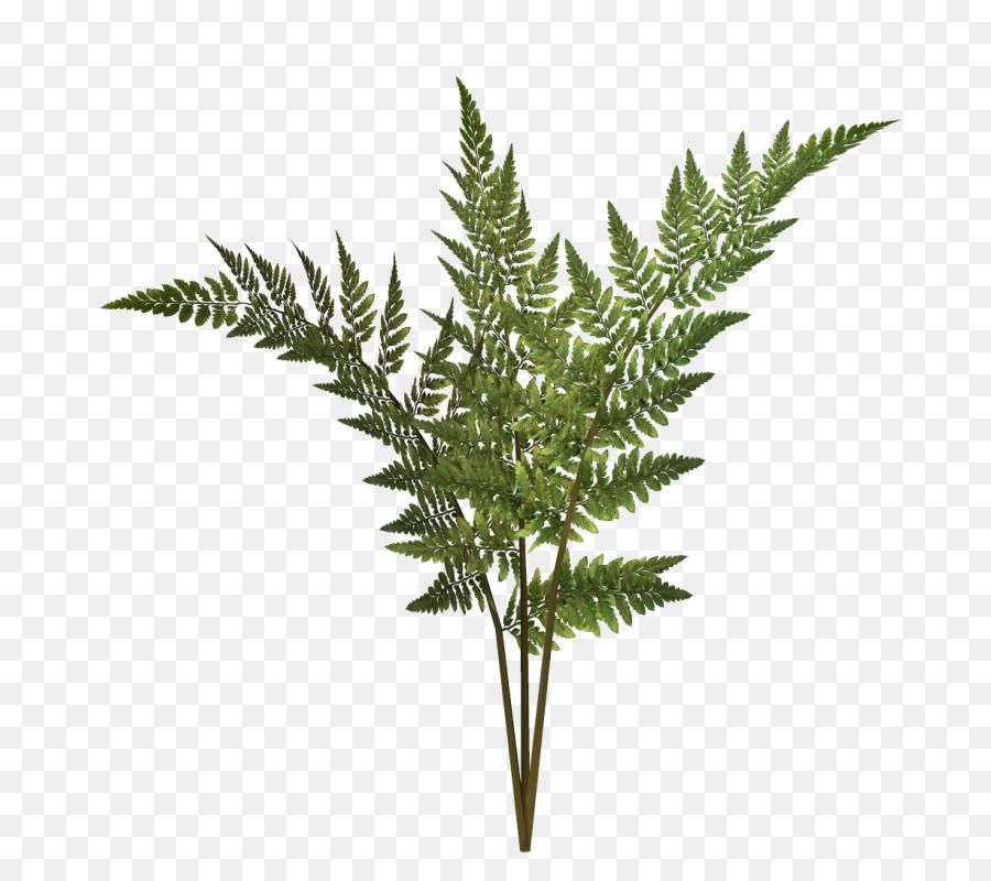 Las Plantas, Dibujo, Plantas Vasculares imagen png.