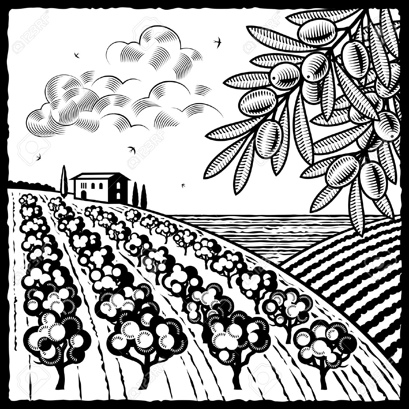 Landscape With Olive Grove Black And White Royalty Free Cliparts.