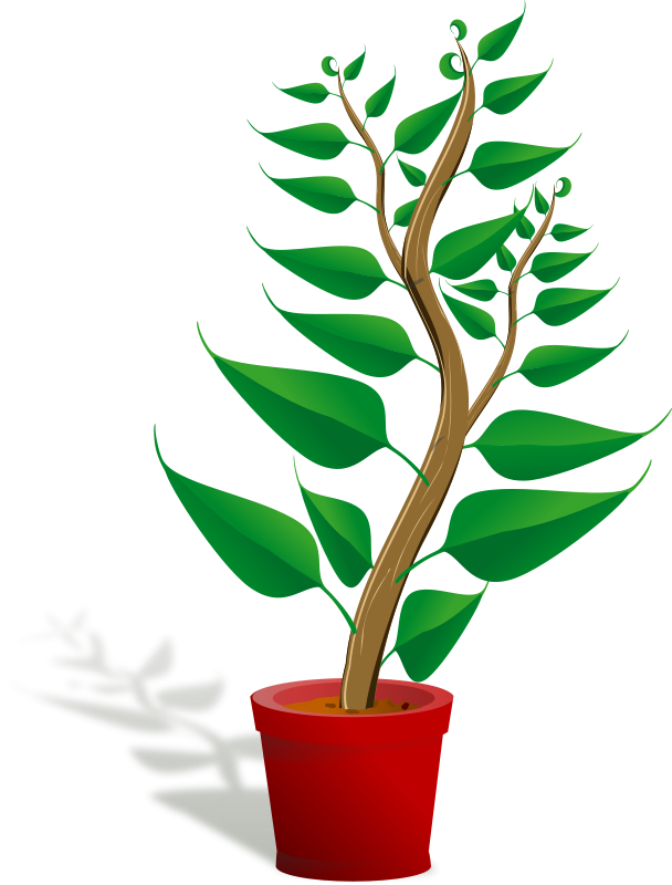 Free Clipart: Green tall plant in its pot.