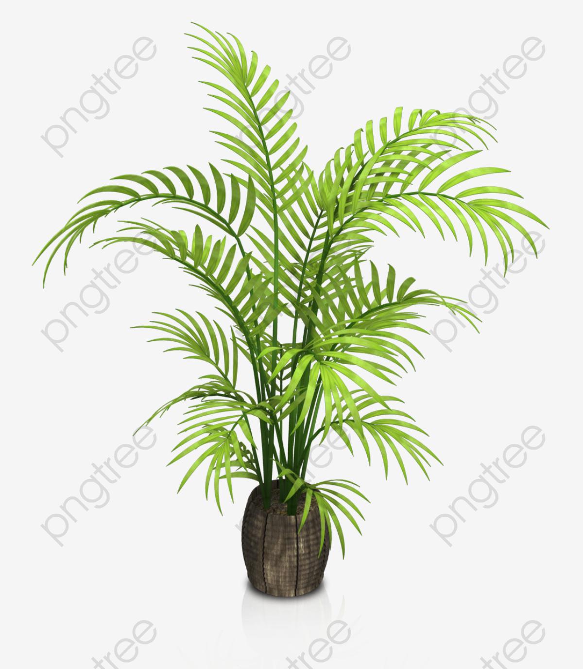 L\'intérieur De La Plante En Pot, Fleur, De L\'herbe, Des.