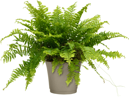 Plantes Png Vector, Clipart, PSD.