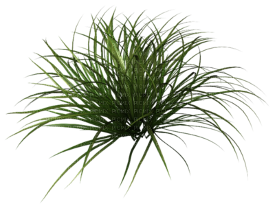 Plante png 5 » PNG Image.