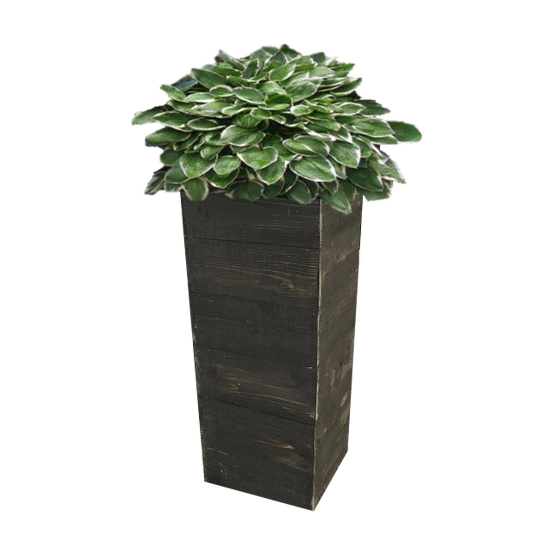 Planter Png (107+ images in Collection) Page 3.