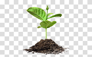 Seed Plant PNG clipart images free download.