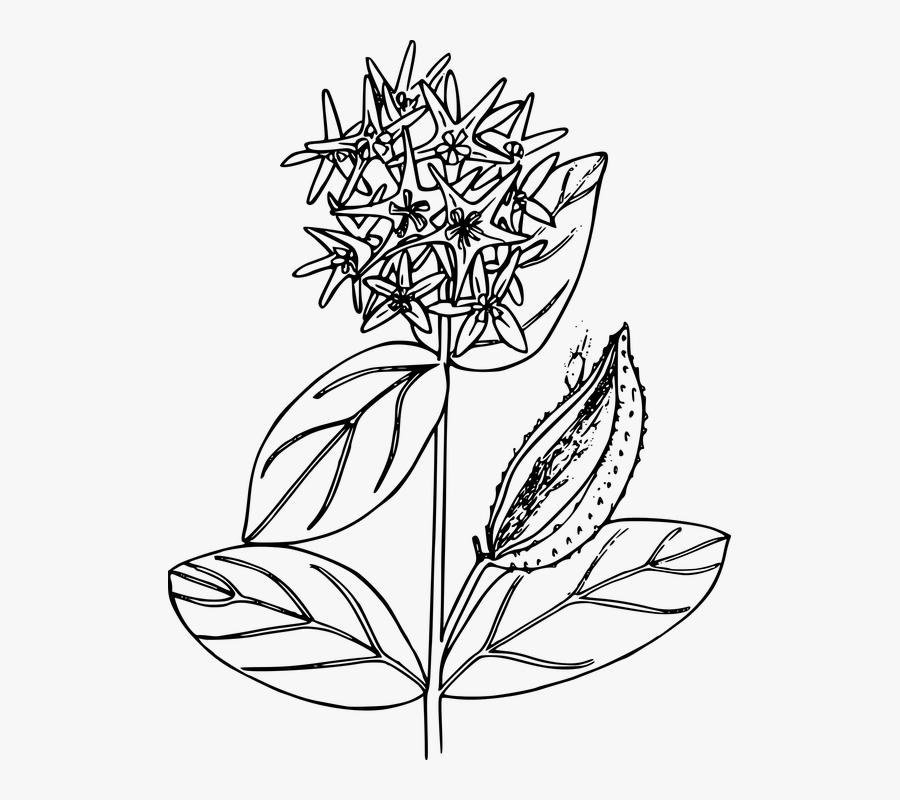 Transparent Planting Clipart Black And White.