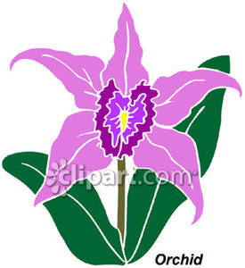 Orchid Plant Clipart Keywords & Suggestions.