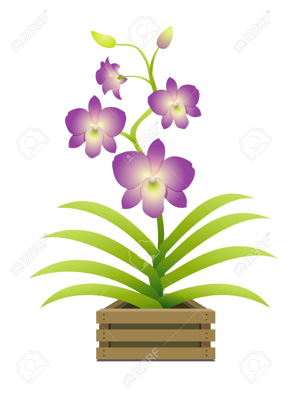 Beautiful Orchid In A Pot Royalty Free Cliparts, Vectors, And.