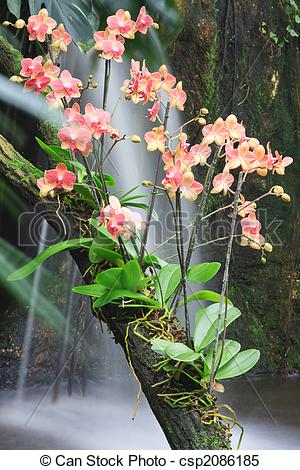 Stock Images of Orchid.