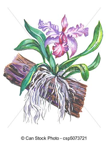 Clipart of Orchid. Hand drawing a water color. csp5073721.