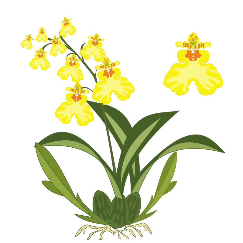 Green Plant Orchid Clipart.