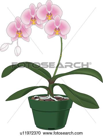 Clip Art of blossom, plants, bloom, flowers, flower, orchid, plant.