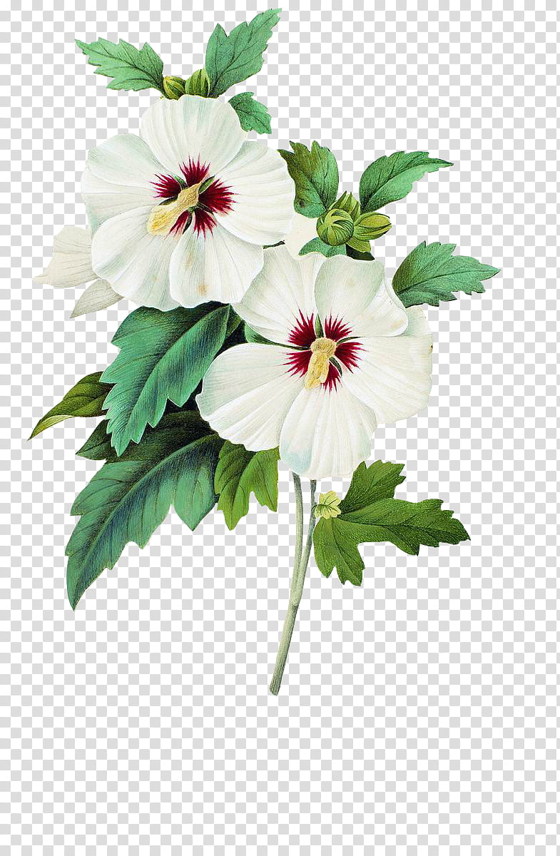 Plants X, white flowers transparent background PNG clipart.