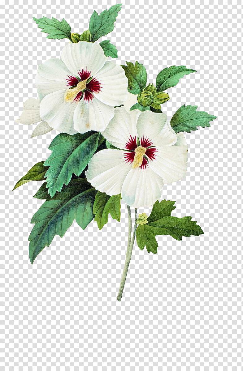 Plants X, white flowers transparent background PNG clipart.