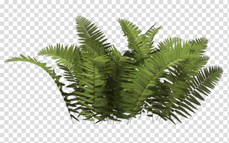 Plant Tree, Bush , close.