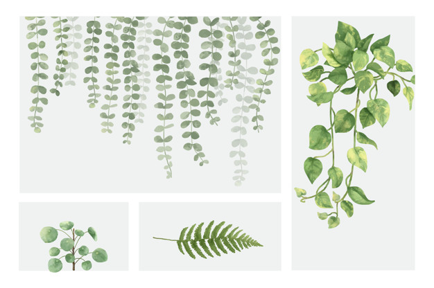 Plants Vectors, Photos and PSD files.