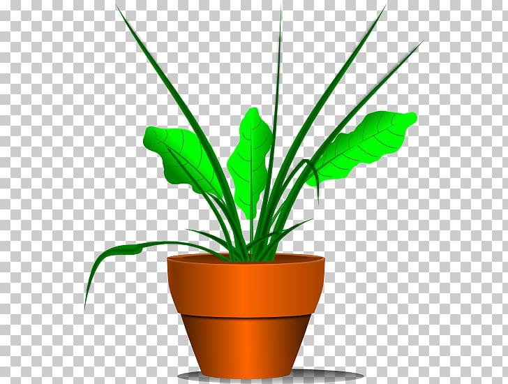 Houseplant , No Plants s PNG clipart.
