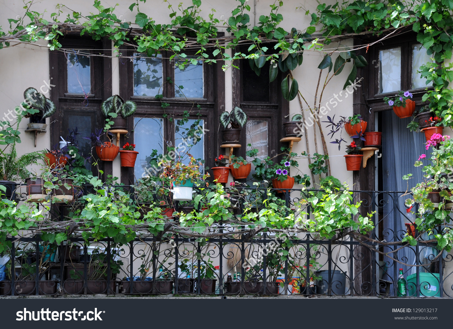 Flowerpots House Plants On Balcony Stock Photo 129013217.