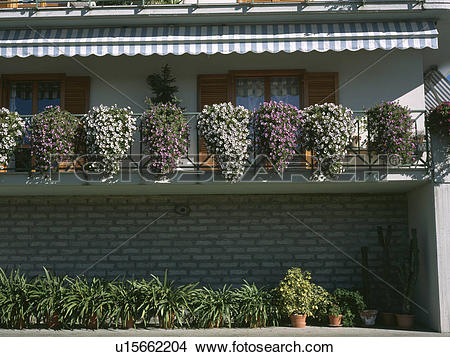 Stock Photo of Flowering plants on apartment balcony below striped.