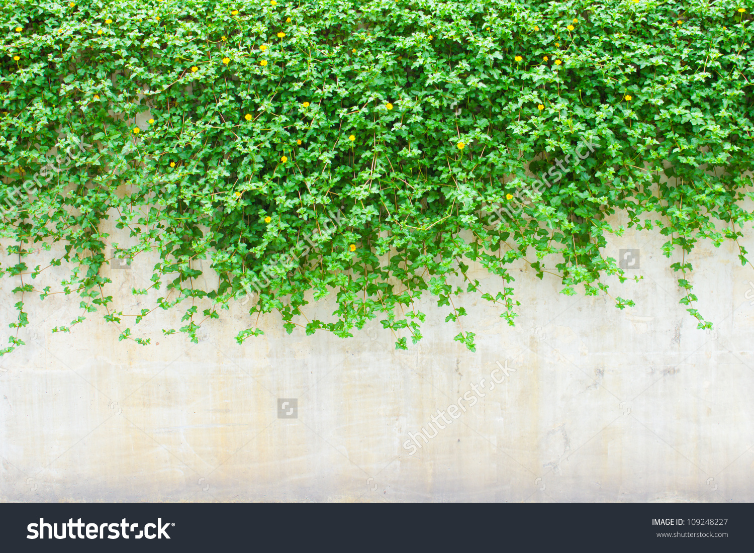 Wall plant clipart Clipground
