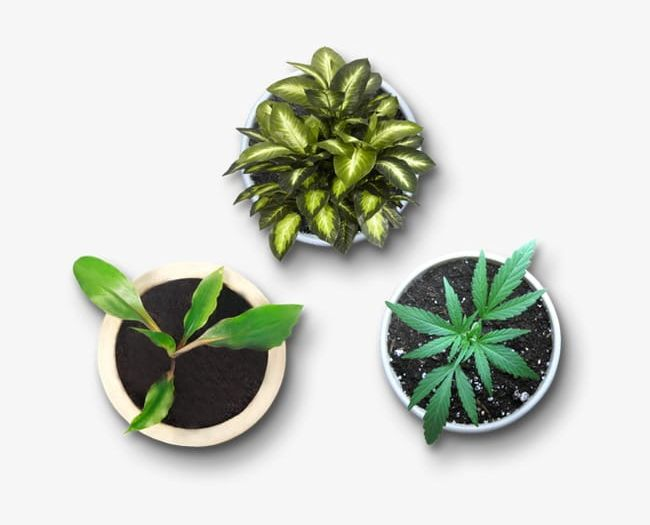 A Plan View Of Potted Plants PNG, Clipart, Angle, Greenery.