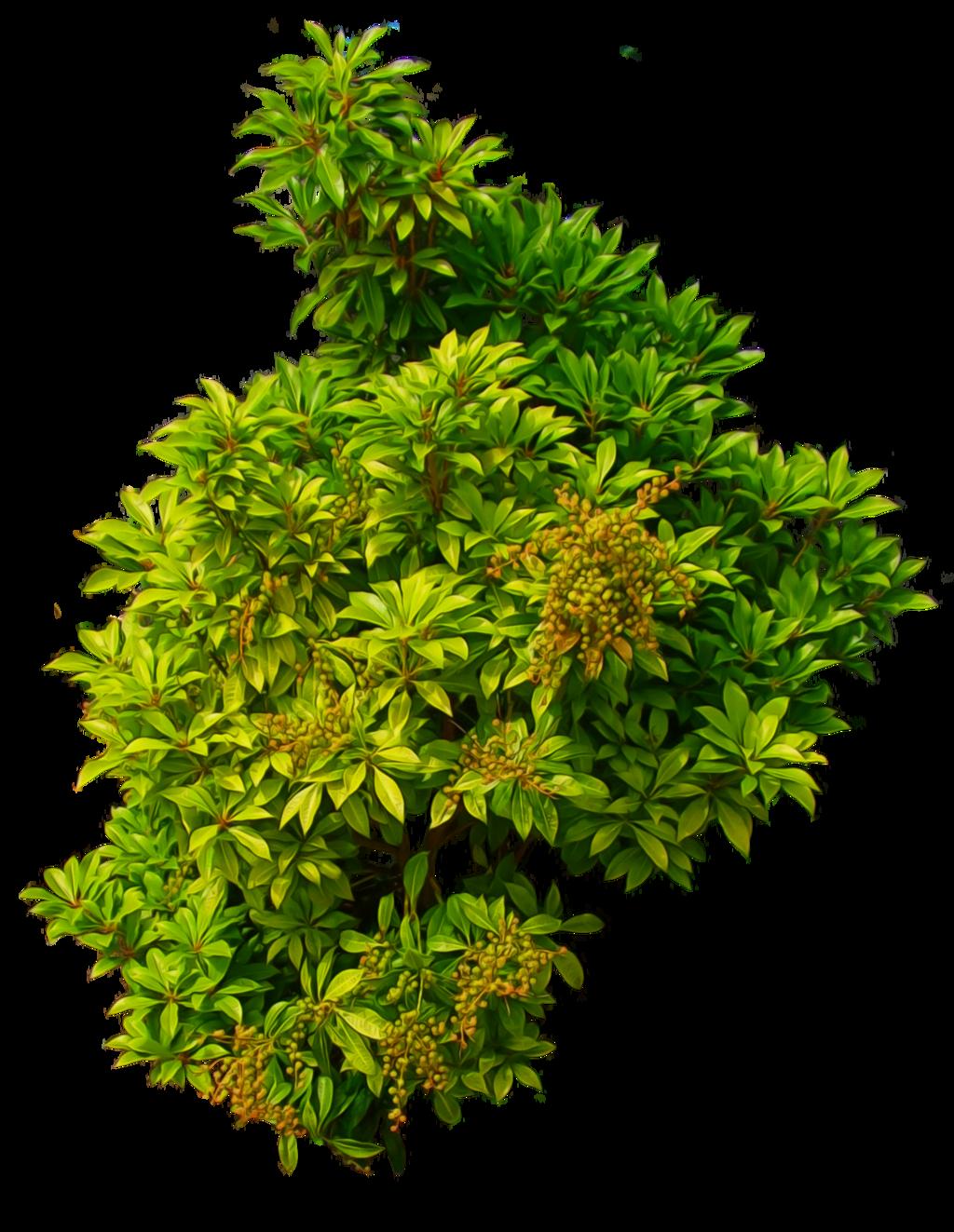 Pin by Bulun S. on green.