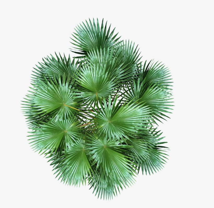 Plant Top View Png Download.