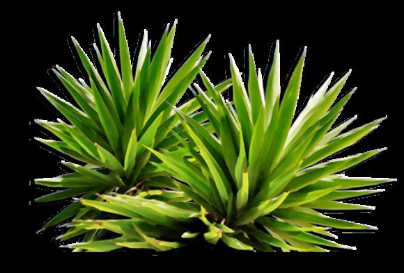 Bushes PNG images free download, bush PNG.