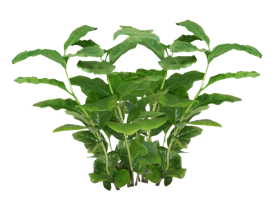 Download PLANTS Free PNG transparent image and clipart.