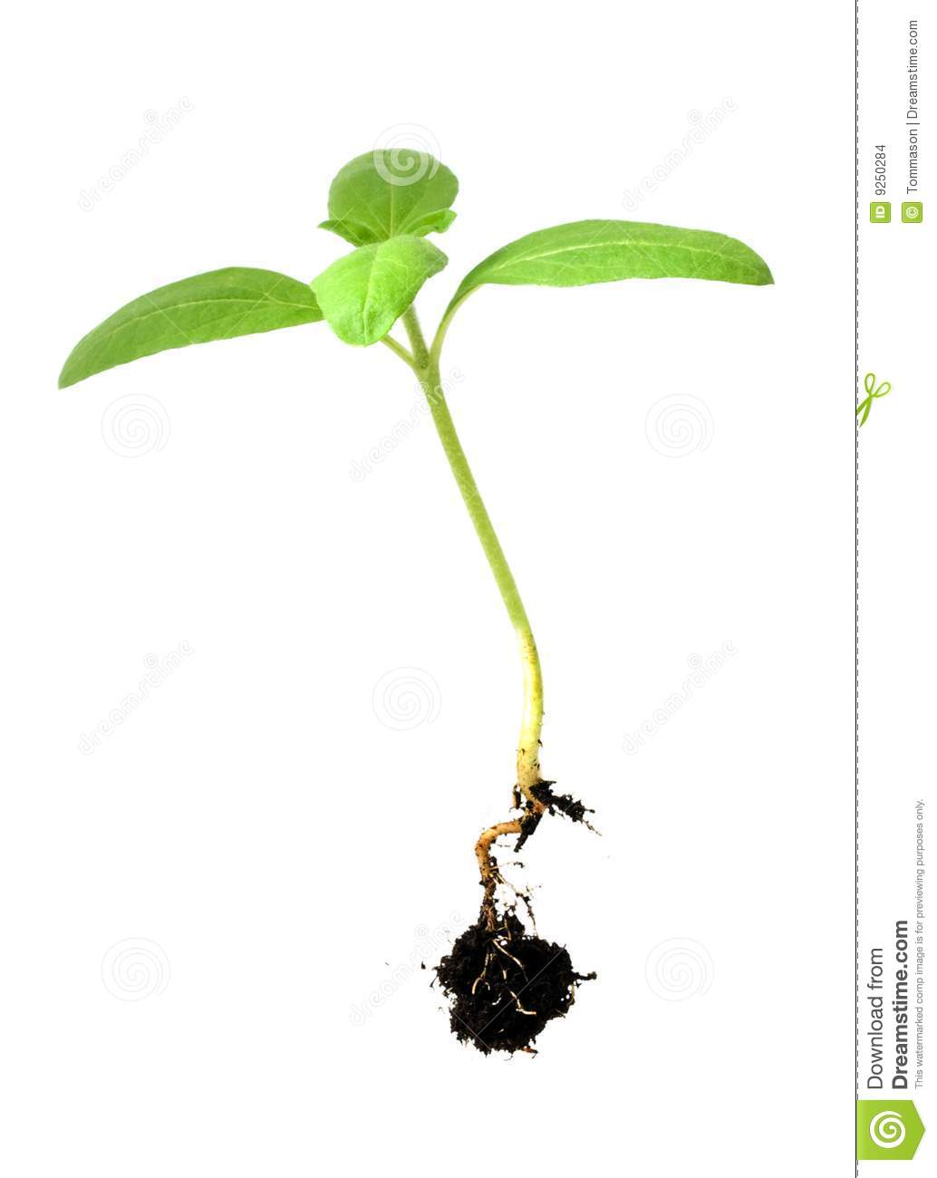 Plant Shoot Stock Images.