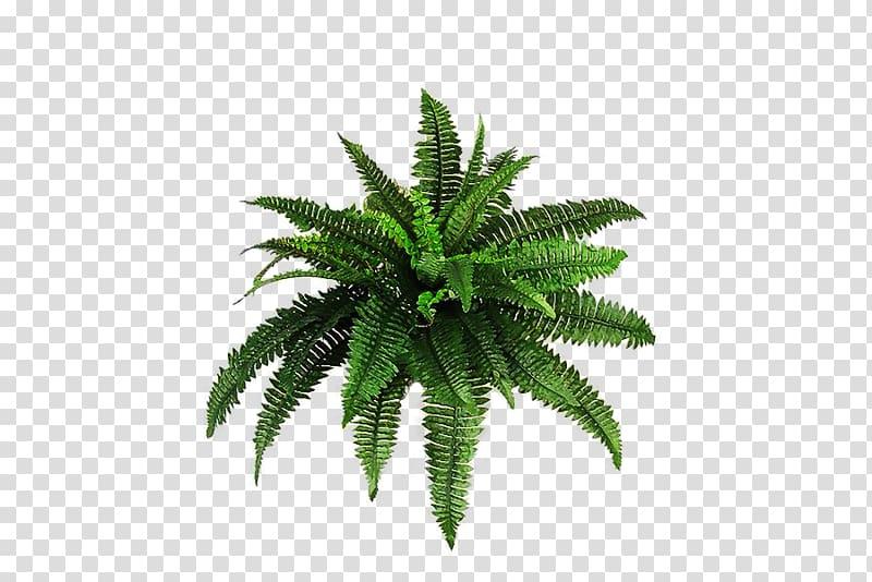 Plant , Plants transparent background PNG clipart.