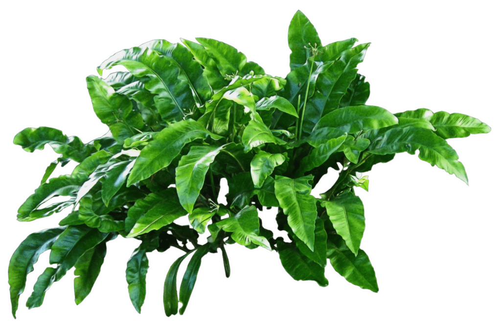 Plants Green transparent PNG.