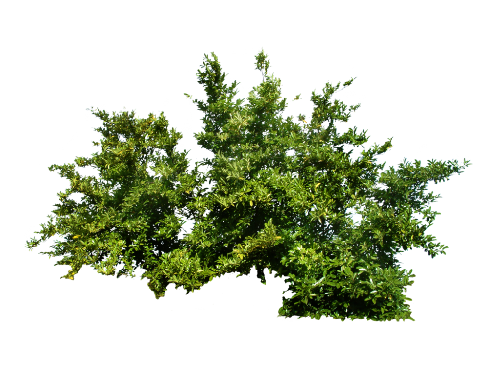 Download Plants PNG Transparent Picture For Designing.