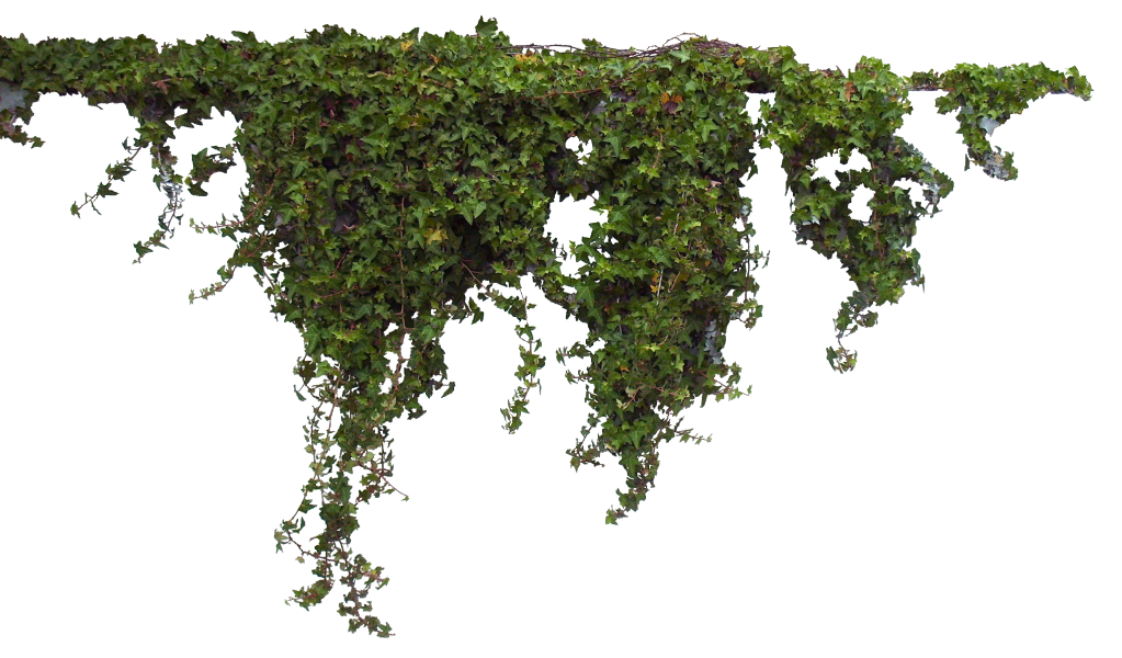 Plant Tree.