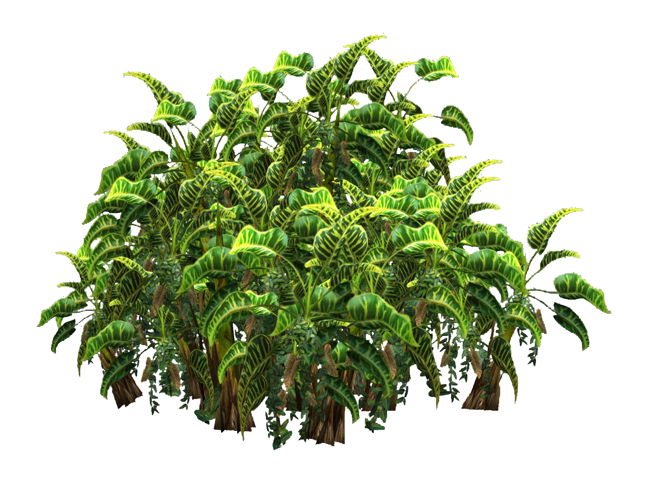 Plants png transparent top view #44921.