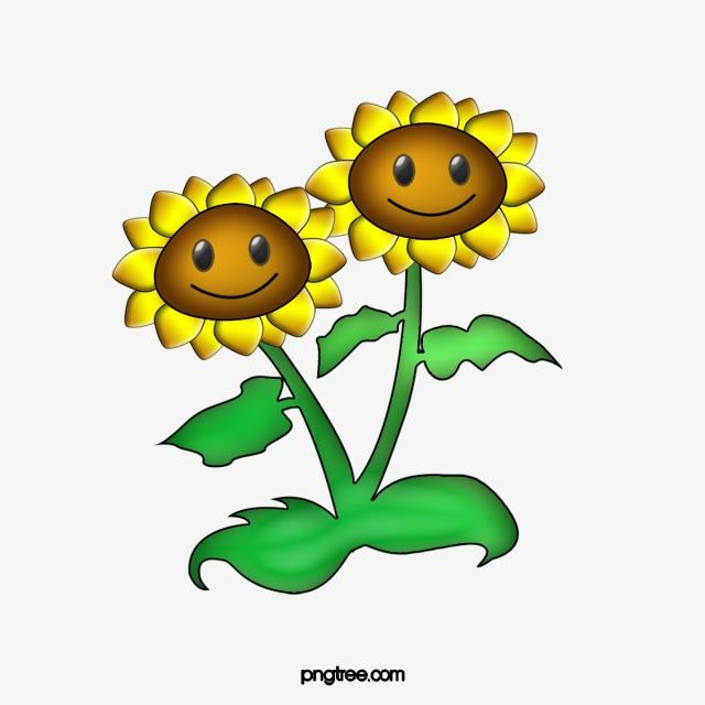 Sunflower, Sunflower Clipart, Plants Vs. Zombies PNG Image.