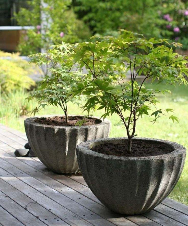 1000+ ideas about Ahorn Baum on Pinterest.