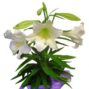 Best Artificial Easter Lily Flower Plastic Flower Picture.